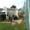 paintball game  (16)